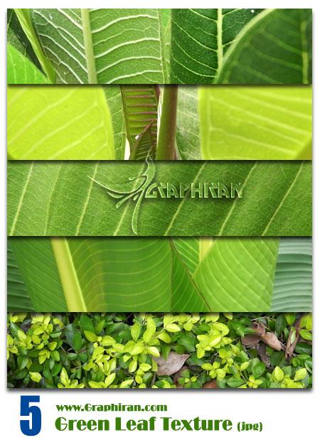 تکسچر برگ سبز گیاهان