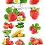 عکس استوک میوه و سبزیجات شماره ۱۴   Vegetables Stock Photo
