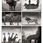 ۵۰ والپیپر هنری از حیات وحش آفریقا | Africa Animals Pictures