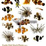 عکس استوک ماهی های آکورایومی – Fish Stock Photo