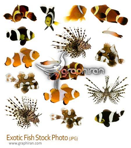 عکس استوک ماهی های آکورایومی - Fish Stock Photo