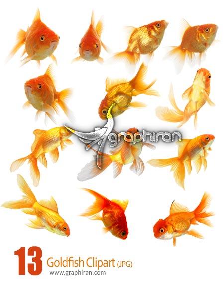 دانلود عکس های با کیفیت ماهی قرمز - Goldfish Clipart