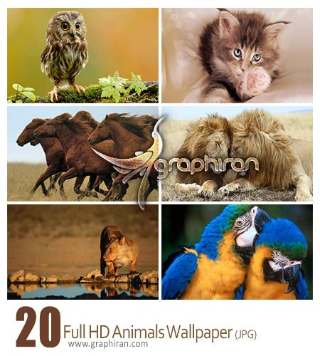 animals hd wallpaper