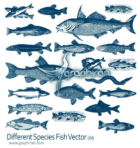 دانلود وکتور تصاویر انواع ماهی های اقیانوس fish vector