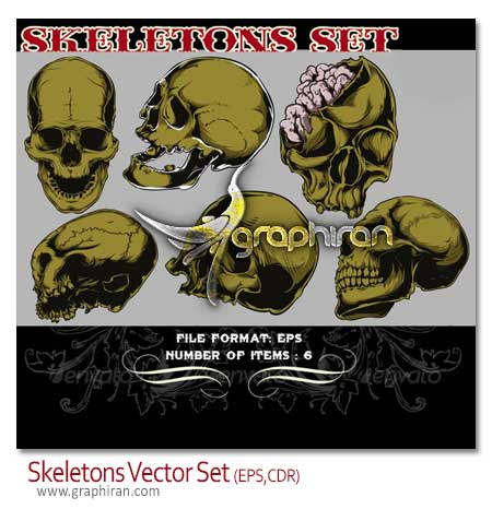 وکتور اسکت سر انسان skeletons vector
