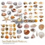 دانلود تصاویر استوک انواع صدف دریایی Seashells Stock Photo