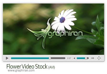 کلیپ ویدئویی گل سفید