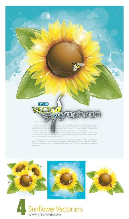 وکتور گل آفتابگردان sunflower vector