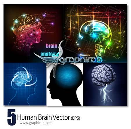 وکتور مغز انسان
