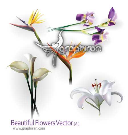 وکتور گل های زیبا