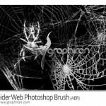 دانلود براش تار عنکبوت فتوشاپ Spider Web Photoshop Brush