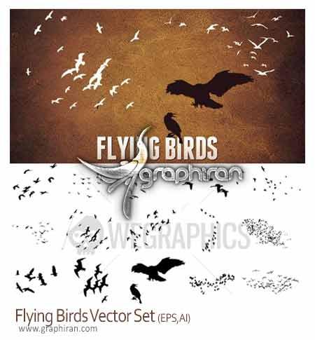 وکتور پرندگان در حال پرواز