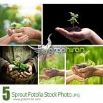 دانلود عکس های استوک جوانه گیاه در دست آدم Sprout Stock Photo