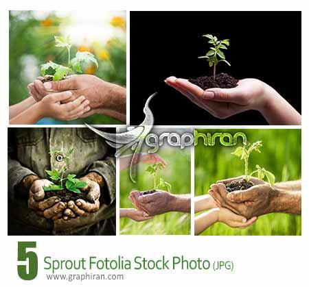 عکس استوک جوانه گیاه