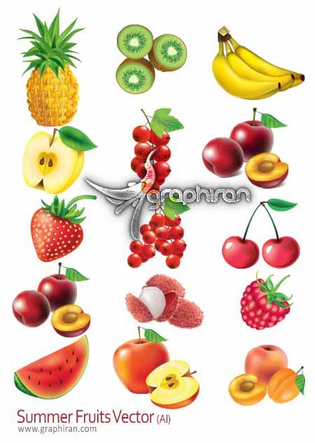وکتور میوه های تابستانی