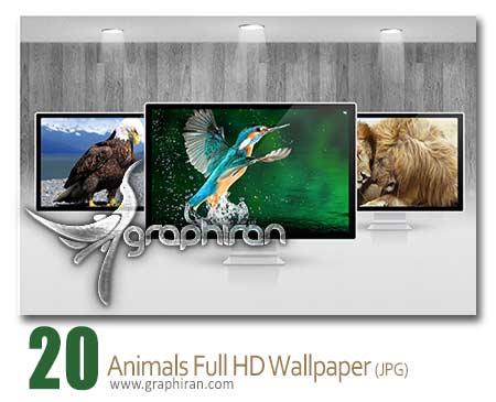 والپیپر زیبای تصاویر حیوانات وحشی