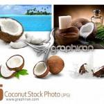 دانلود تصاویر استوک میوه نارگیل Coconut Stock Photo