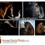 دانلود عکس های شاتر استوک اسب های زیبا با کیفیت بالا