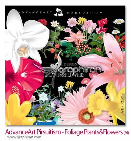 گیاه و گل های زیبا
