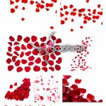 دانلود تصاویر استوک گلبرگ های گل رز Rose Petals Stock Photo