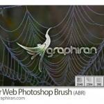 دانلود براش جدید تار عنکبوت برای فتوشاپ با کیفیت بالا