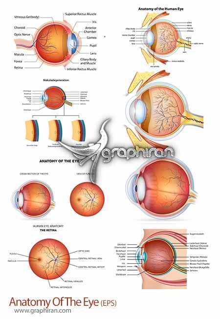 آناتومی چشم انسان