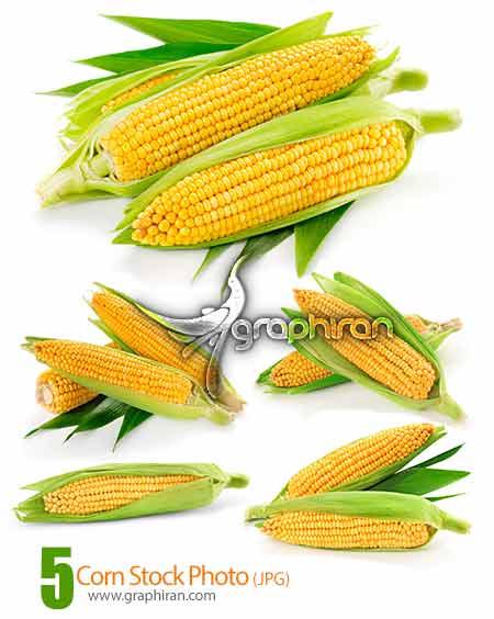 corn stock photo دانلود عکس های استوک بلال یا ذرت باکیفیت بالا Corn Stock Photo