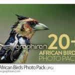 دانلود مجموعه عکس های با کیفیت زیباترین پرندگان آفریقایی