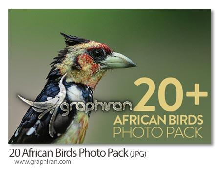 عکس پرندگان قاره آفریقا