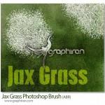 براش فتوشاپ چمن از زاویه دید بالا Jax Grass Photoshop Brush