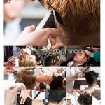 دانلود عکس های شاتر استوک آرایشگر مرد در حال کوتاه کردن مو