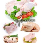 دانلود عکس های استوک مرغ با کیفیت بالا Chicken Stock Photo
