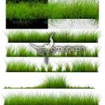 دانلود تصاویر PNG چمن بدون پس زمینه Isolated Grass Beds