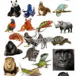 دانلود تصاویر استوک با کیفیت حیوانات وحشی محصول Fotolia