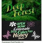 فونت الهام گرفته شده از طبیعت و برگ درختان Evergreen Font Family