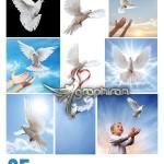 دانلود تصاویر استوک کبوتر با کیفیت بالا از ShutterStock