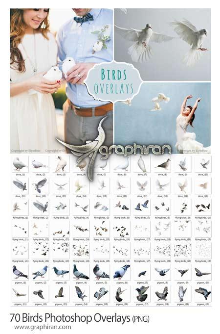 تصاویر کبوتر PNG