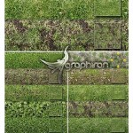 دانلود ۱۰ پترن چمن برای فتوشاپ Tileable Grass Patterns