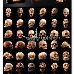 تصاویر با کیفیت اسکلت واقعی سر انسان Awesome Real Human Skulls