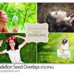 تصاویر پوششی گل قاصدک پخش شده در هوا Dandelion Seed Overlays