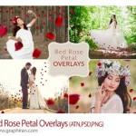 مجموعه تصاویر گلبرگ گل رز قرمز برای عکس Red Rose Petal Overlays