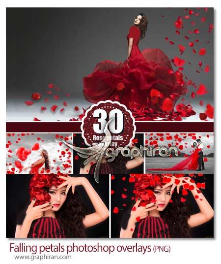 پاشیدن گل رز قرمز روی عکس