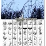 دانلود مجموعه ۹۰ براش فتوشاپ علف و گیاه Ron's Weeds