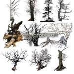 دانلود مجموعه تصاویر برش خورده شاخه و تنه درخت Ron's Trees