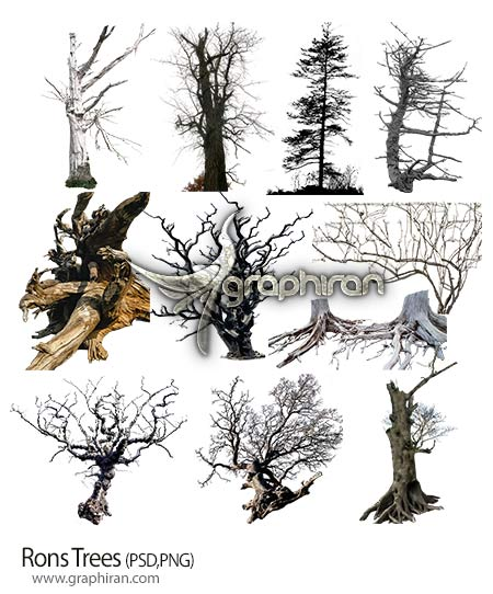 تصاویر برش خورده شاخه های درخت