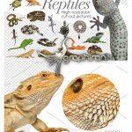 دانلود تصاویر برش خورده خزندگان Reptiles Cut-out Pictures