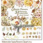 دانلود پک کلیپ آرت گل های قهوه ای Watercolor Sepia Flowers Clipart