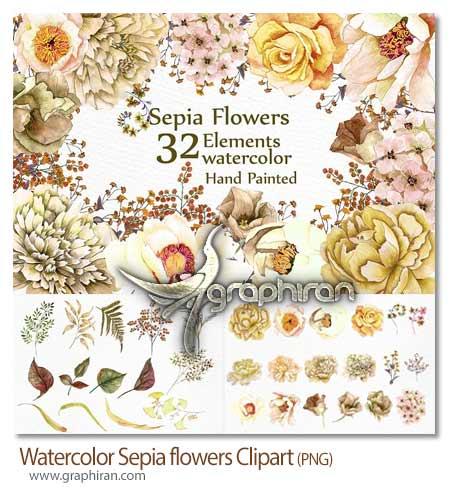مجموعه تصاویر کلیپ آرت گل های قهوه ای