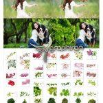 دانلود 50 عکس شکوفه و گیاه PNG برش خورده Blossom Tree Branch Overlays