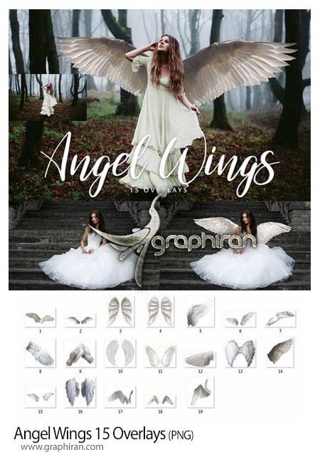 بال فرشته PNG